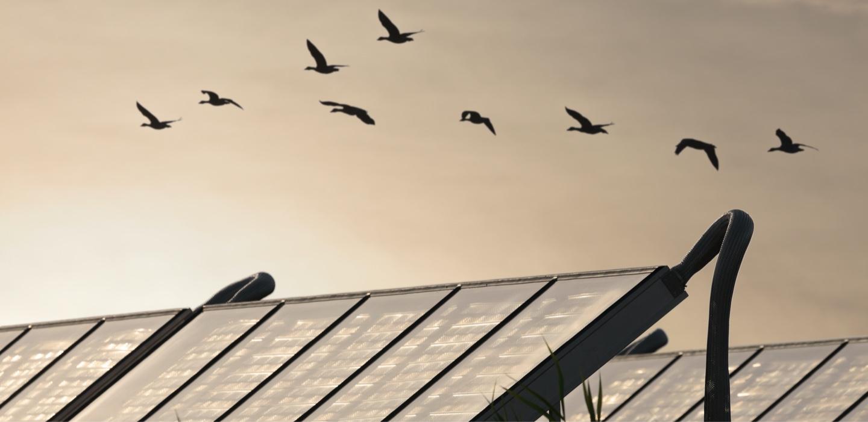 Pájaros volando con un atardecer de fondo