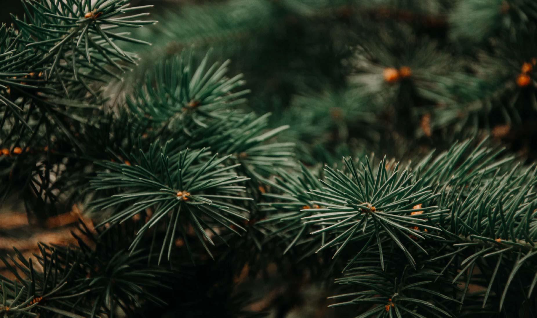 Textura plantas