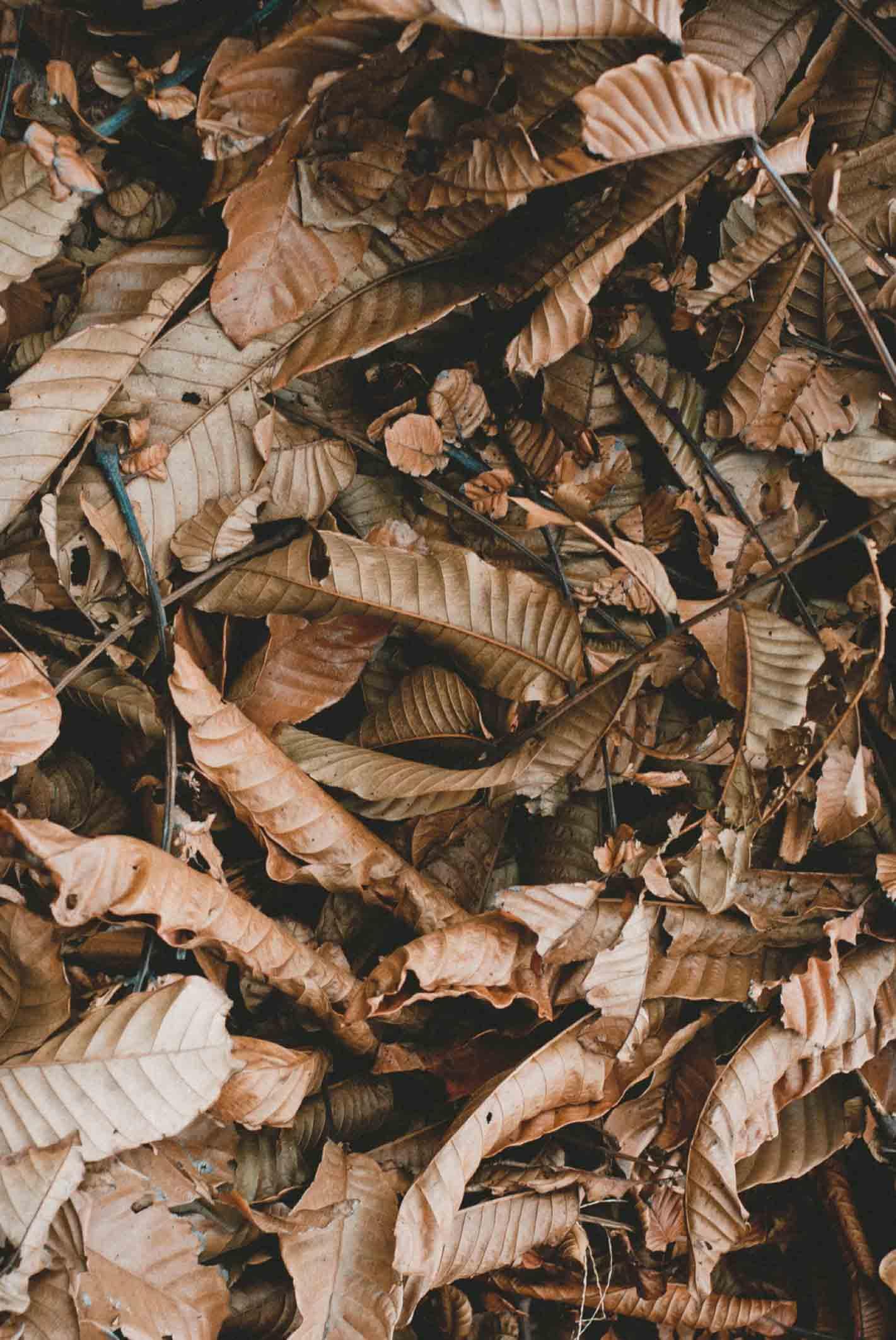 Textura hojas otoño