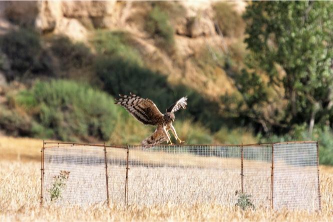 Proyecto para la protección de aves